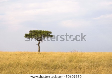 Single tree in the middle of vast African grass plains. - stock photo