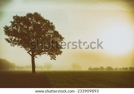single tree on a meadow with vignette - stock photo