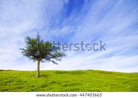 Single tree on green hillunder cloudy blue sky. - stock photo