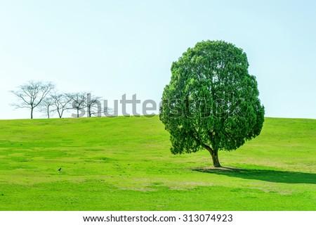 Single tree,Tree in Olympic park. - stock photo