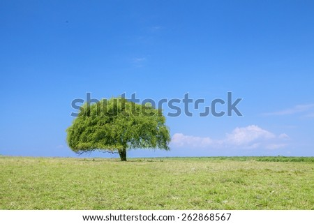 Single tree under blue sky at spring, shot on countryside - stock photo