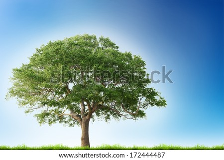 Single tree with green grass over blue sky background - stock photo
