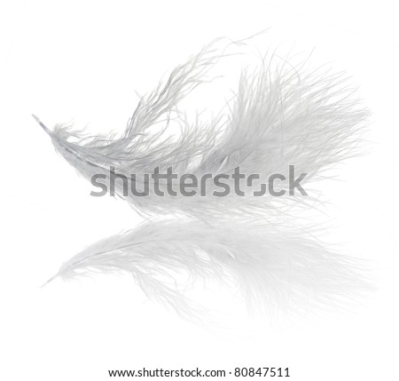 single very fluffy light feather isolated on white background - stock photo