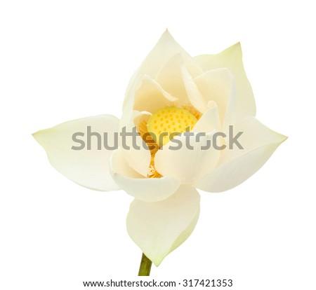 Single white Lotus flower isolated on white background - stock photo