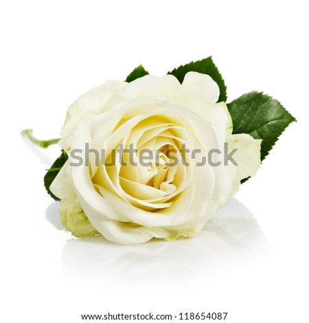 Single white rose with leaves and stem on white background - stock photo
