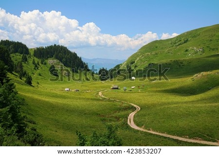 "sinuous trail crosses a mountain valley in ""Biogradska Gora"" National Park, Montenegro   - stock photo"