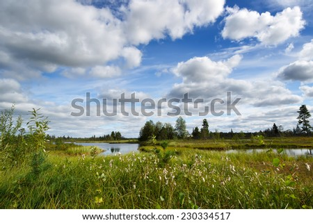 Site blossoming cotton-grass against trees,  lake and sky with clouds - stock photo