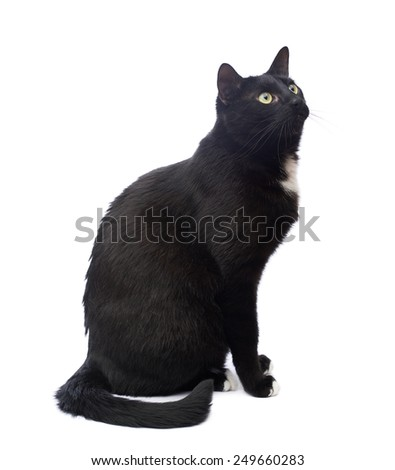Sitting black cat isolated over the white background - stock photo