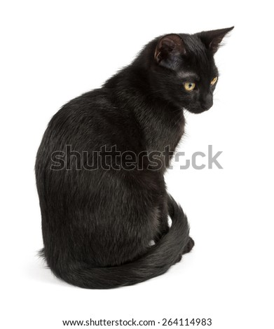 sitting black cat of young age - stock photo