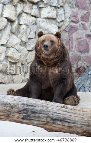 Sitting brown bear in the Zoo - stock photo