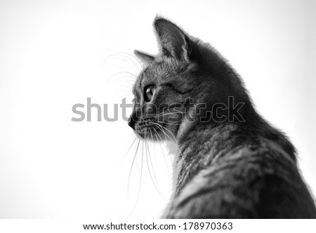 Sitting cat and looking through the window on a blur window background low ISO,watching cat close up, little cat, vignette photo, black and white photo, artistic  - stock photo