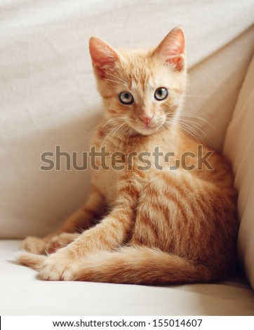 Sitting cute ginger kitten with direct eye contact - stock photo