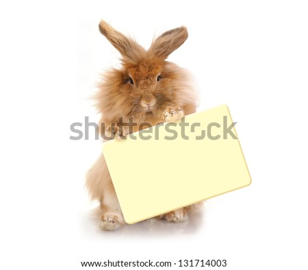 Sitting Funny bunny  holding plate, isolated on white background. - stock photo