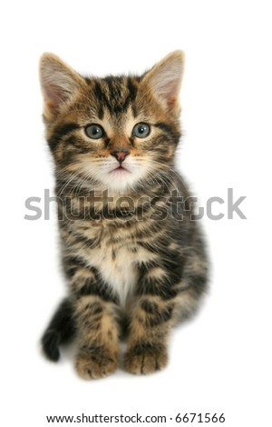 Sitting kitten isolated on white - stock photo