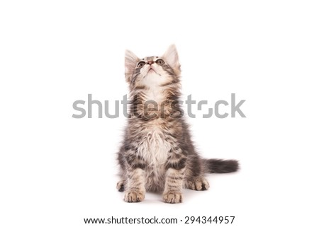 Sitting kitten, looking up, isolated on white - stock photo