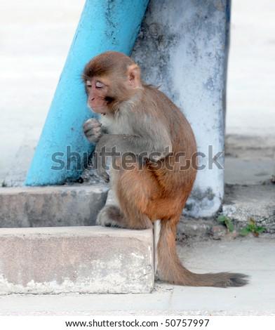 sitting monkey - stock photo