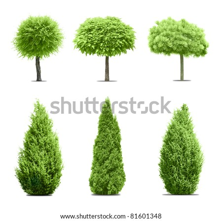Six green trees isolated on white - stock photo