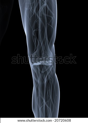 skeletal knee - stock photo