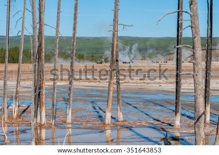 Skeletal trees in the Lower Geyser Basin of Fountain Paint Pots. Bison moving along the basin in the background. - stock photo