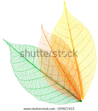Skeleton leaves on a white background . - stock photo