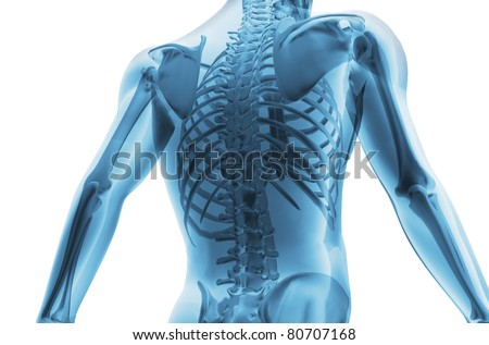 Skeleton of the man. 3D the image of a man's skeleton under a transparent skin - stock photo
