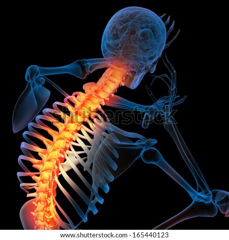 Skeleton of the man with the backbone - stock photo