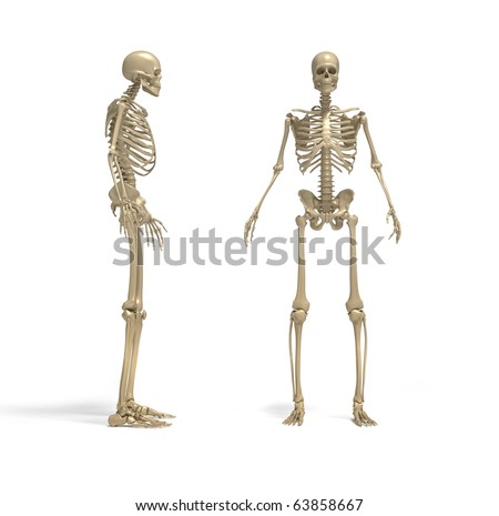 Skeleton - this a 3d render illustration - stock photo