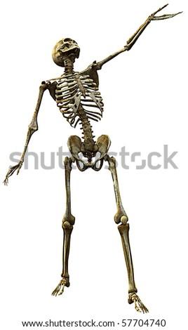skeleton, what's up? - stock photo