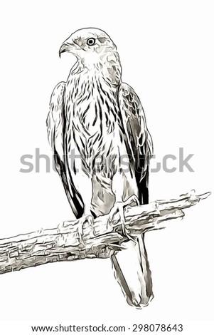 Sketch eagle - stock photo