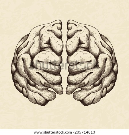 brain drawing stock photos images amp pictures shutterstock