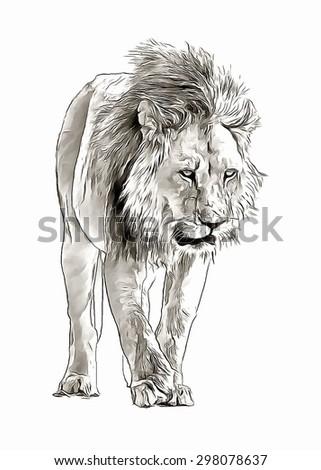 Sketch lion - stock photo