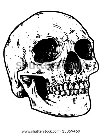 sketched skull image - stock photo