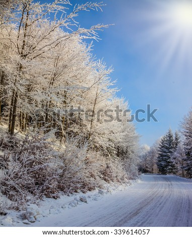 Ski track runs along the road in the snowy forest.  Bright and sunny morning, New Year's - stock photo