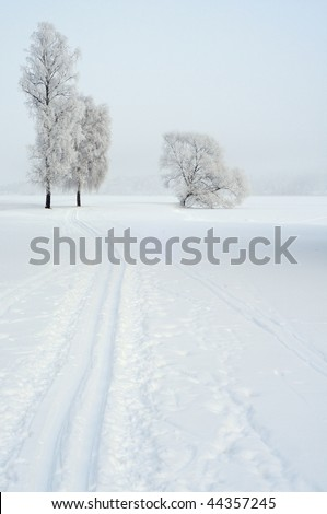 Ski track with winter trees - stock photo