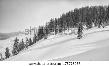 Ski tracks in Jackson Hole backcountry,   a quiet day outside the ski resort. - stock photo