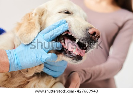 Skillful male vet is examining the pet - stock photo
