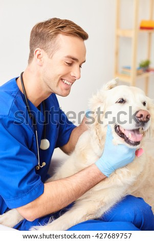 Skillful male veterinarian is caring of animal - stock photo