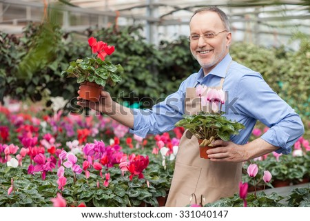 Skillful senior gardener is planting flower at greenhouse. He is standing and holding flowerpots in both hands. The man in apron is looking forward and smiling with proud - stock photo