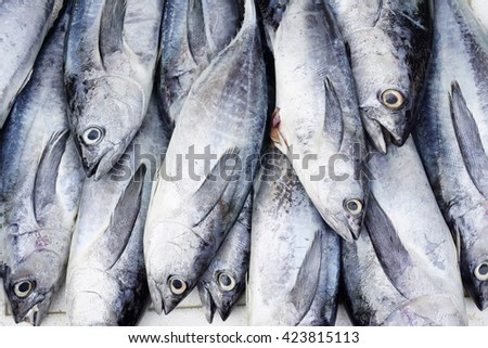 Skipjack tuna - stock photo