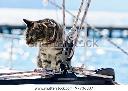 Skipper cat with sailing yacht rigging - stock photo