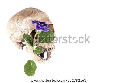 Skull and Flower on a white background. - stock photo