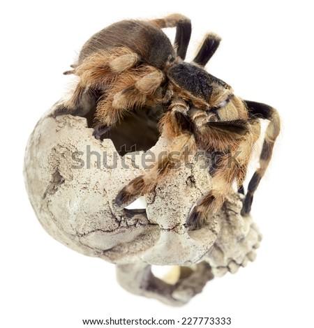 Skull and Tarantula - stock photo