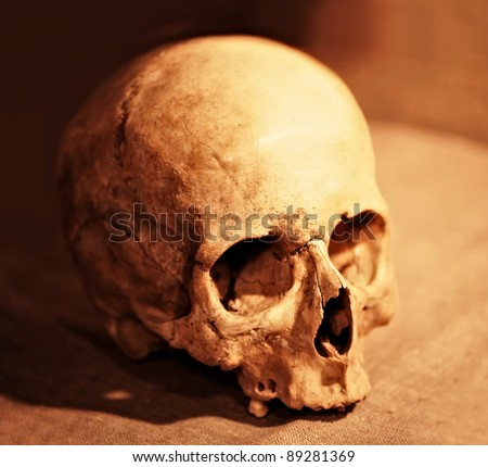 Skull close up - stock photo