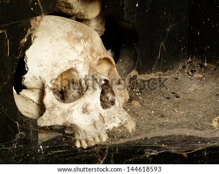 skull cobwebs - stock photo