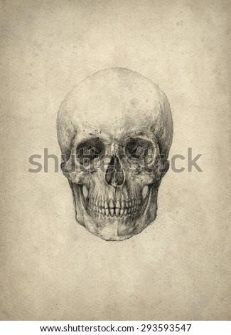Skull drawing - stock photo