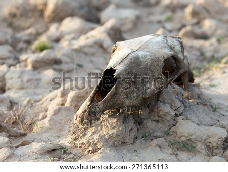 skull horse on nature - stock photo