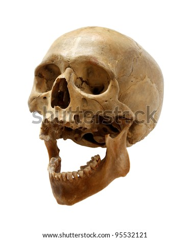 Skull of the person on a white background. - stock photo