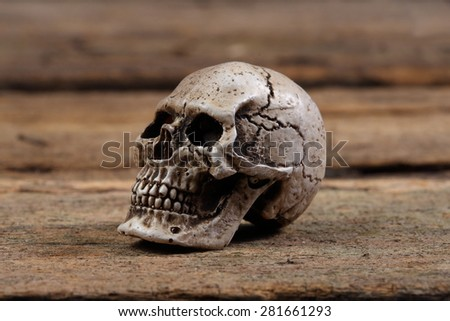 Skull resting on the old wooden floor. - stock photo
