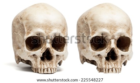 skull without jaw. isolated on white background, with shadow - stock photo