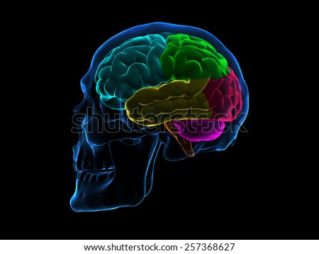 Skull X-Ray Brain Side - stock photo
